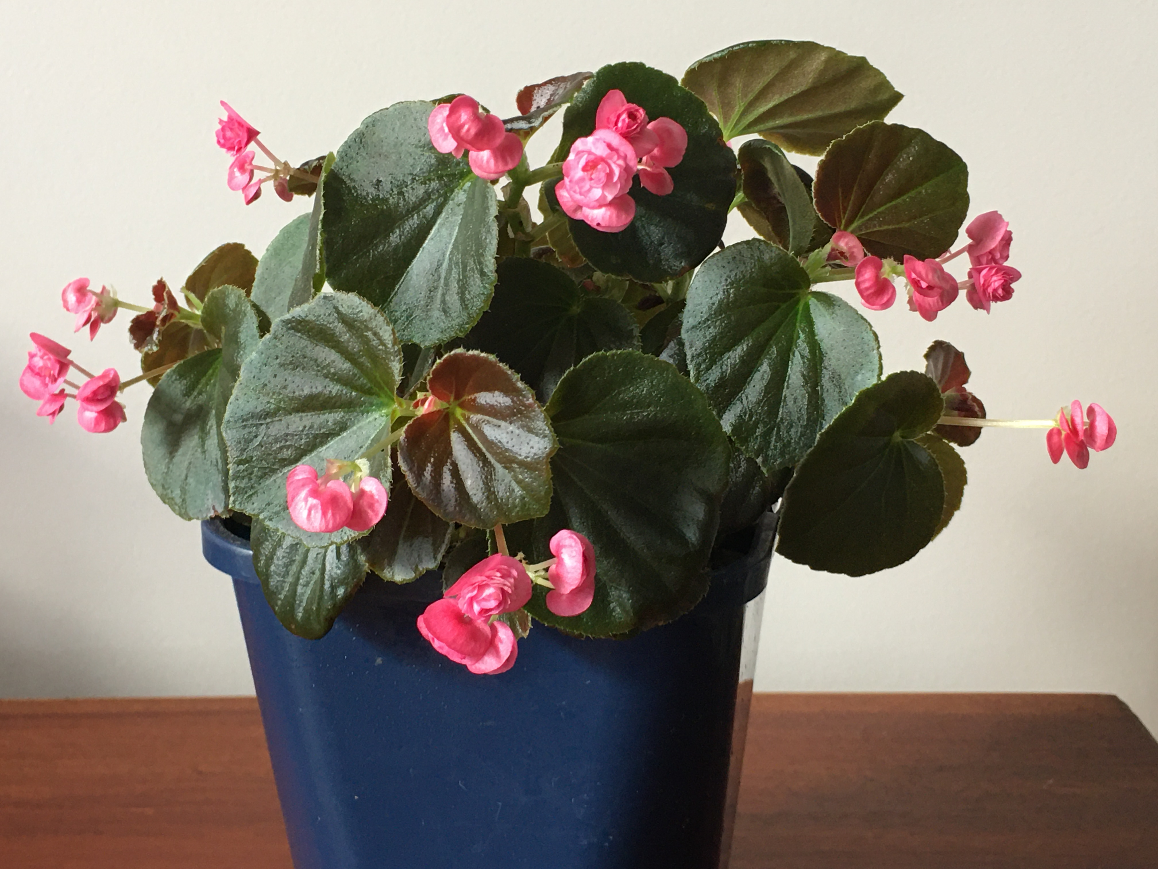3. Container plant... flowering or foliage only