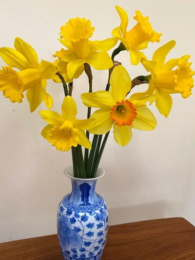 Assorted daffodils - Coral Page